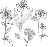 Ornamental Flowers Vector Illustration. Black and White Ornamental Flowers with Stems and Leaves Vector Illustration Stock Photography