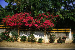 Ornamental foliage on the fence Royalty Free Stock Photos