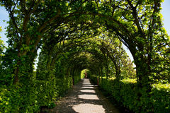 Ornamental garden. With arcs and a path Stock Images