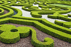 Ornamental garden. An ornamental garden of boxwood Royalty Free Stock Image