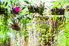Ornamental garden behind the house. royalty free stock photography
