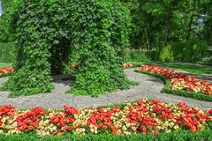 Ornamental garden with blooming begonias Stock Photography