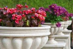 Ornamental Garden Royalty Free Stock Photos