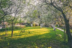 Ornamental garden with majestically blossoming large cherry trees and Apple trees on a fresh green lawn.  stock photography
