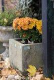 Ornamental garden and pergola. Flower pots, Stock Image