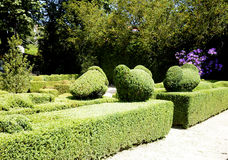 Ornamental garden with sculpted hedges Royalty Free Stock Images