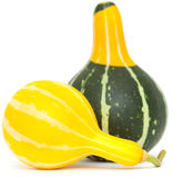 Ornamental gourd Royalty Free Stock Image