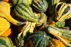 Ornamental gourds Stock Image
