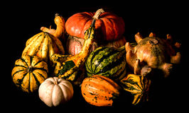 Ornamental gourds, Caravaggio lighting style. Ornamental gourds are generally used for fall decorative purposes such as a centerpiece or mantel display. They can Royalty Free Stock Photography
