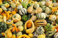 Ornamental gourds Stock Images