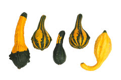 Ornamental gourds isolated Stock Photography