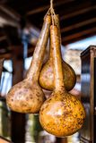 Old gourds for decoration Royalty Free Stock Photo