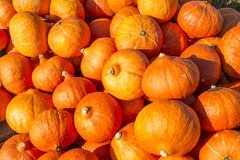 Ornamental gourds and pumpkins . Stock Photography