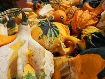 Ornamental gourds and squash. Close up of colorful ornamental fall gourds and squash royalty free stock photo