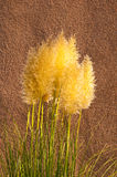 Ornamental grass and adobe Royalty Free Stock Photo