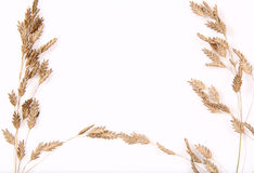 Ornamental grass background Stock Image