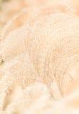 Ornamental grass background Royalty Free Stock Photos
