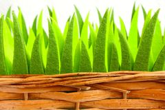 Ornamental grass in a basket Royalty Free Stock Photography