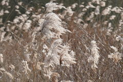 Ornamental grass stock image