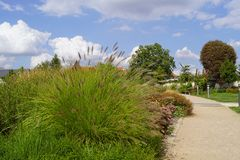 Ornamental grass in the park - September royalty free stock image