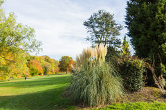 Ornamental grass plant in Autumn. At a park in a rural setting, UK Stock Photos