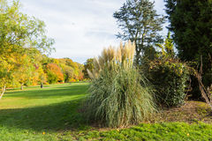 Ornamental grass plant in Autumn. At a park in a rural setting, UK Royalty Free Stock Photo