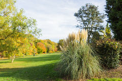 Ornamental grass plant in Autumn. At a park in a rural setting, UK Royalty Free Stock Photos