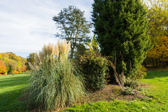 Ornamental grass plant in Autumn. At a park in a rural setting, UK Stock Photo