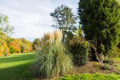 Ornamental grass plant in Autumn. At a park in a rural setting, UK Stock Images