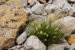 Ornamental Grass and Rock Garden Royalty Free Stock Images