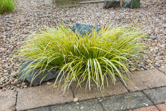 Ornamental grass set in rockery Royalty Free Stock Photo