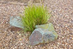 Ornamental grass set in rockery Stock Image