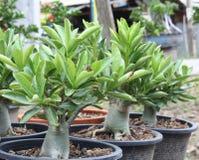 Ornamental green. Nature ornamental plants  ornamental  beautiful wood rain flower green Royalty Free Stock Photography