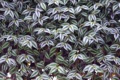 Ornamental leaves Royalty Free Stock Photo