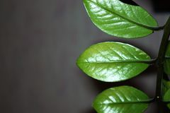 Ornamental leaves in green and black and shows the dark side of natural concepts stock image