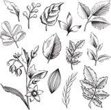 Ornamental Leaves Vector Illustration. Black and White Ornamental Leaves and Flower Vector Illustration Stock Images
