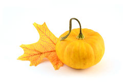 Ornamental miniature pumpkin with leaf Stock Photography