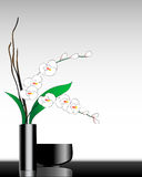 Ornamental orchids. Vector illustration of ornamental orchids Stock Photo