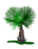 Ornamental Palm. Is hand drawn original artwork. The vector file is in AI-EPS8 format Stock Photo