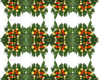 Ornamental Pepper  background Royalty Free Stock Images