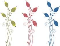 Ornamental plant Stock Image