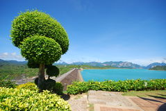 Ornamental plant on dam view point. This is ornamental plant on dam view point.this place is in south of thailand Stock Image