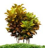 Ornamental plant Stock Photos