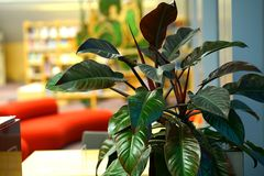 Ornamental plant in the National Library of Latvia royalty free stock image