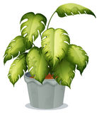 An ornamental plant in a pot Stock Image