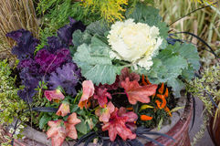 Ornamental planter with fall colors Stock Photos