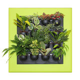 Ornamental plants Royalty Free Stock Image