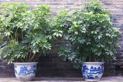Ornamental Plants Royalty Free Stock Photography