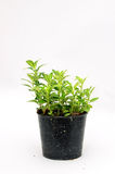Ornamental plants in black potwith copy space for text Stock Photo