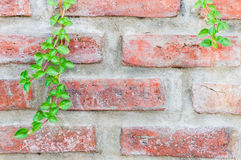 Ornamental plants on brick wall. Close-up view Stock Photo